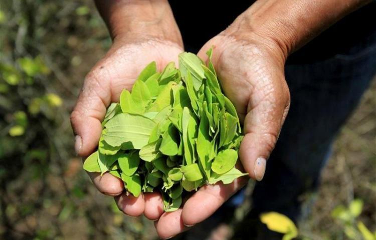 Colombia vuelve a recortar terreno a los cultivos de coca