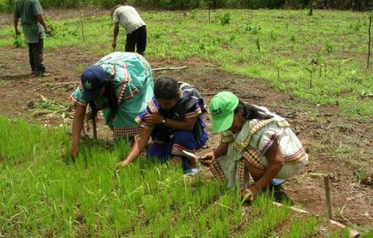 Gobierno promete que no habrá desabastecimiento de arroz
