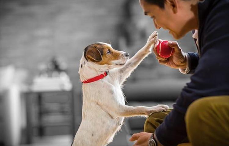 Depresión y ansiedad de las mascotas durante la emergencia sanitaria