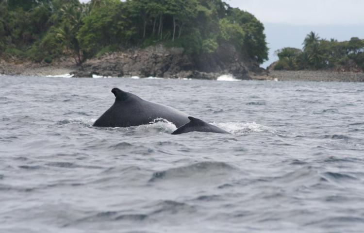 Inicia la temporada de avistamiento de ballenas