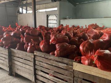 Panamá reanuda exportaciones de zapallo hacia Miami, EE.UU
