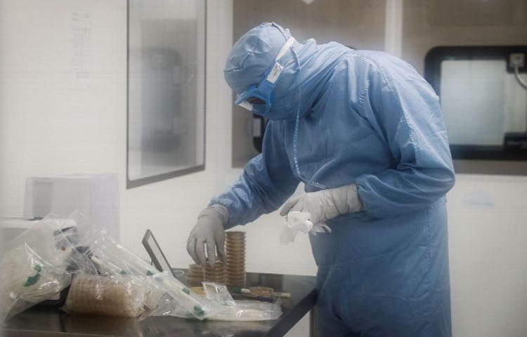 Prueban vacuna gringa con monos, estaría lista en noviembre