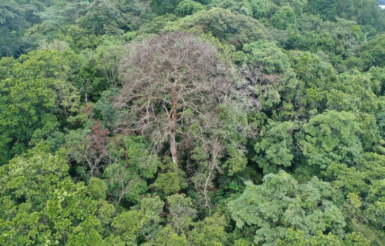 En los trópicos, los rayos caen más de 100 millones de veces al año