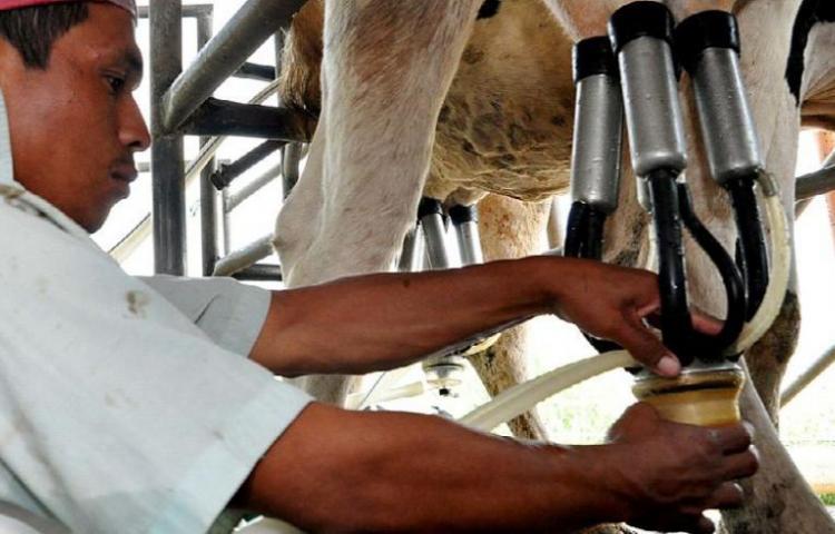 Suspensión de importación de leche desde Costa Rica afecta mercado panameño
