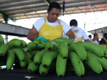 Banano, pescado, carne bovina y azúcar panameña mantienen buen desempeño en sus exportaciones