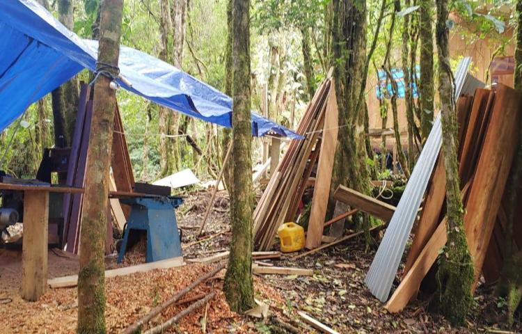 Sorprenden a cuatro en labores de tala y construcción ilegal