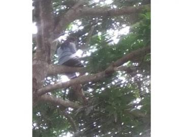 Estudiante es captada buscando señal de internet en un árbol para poder estudiar