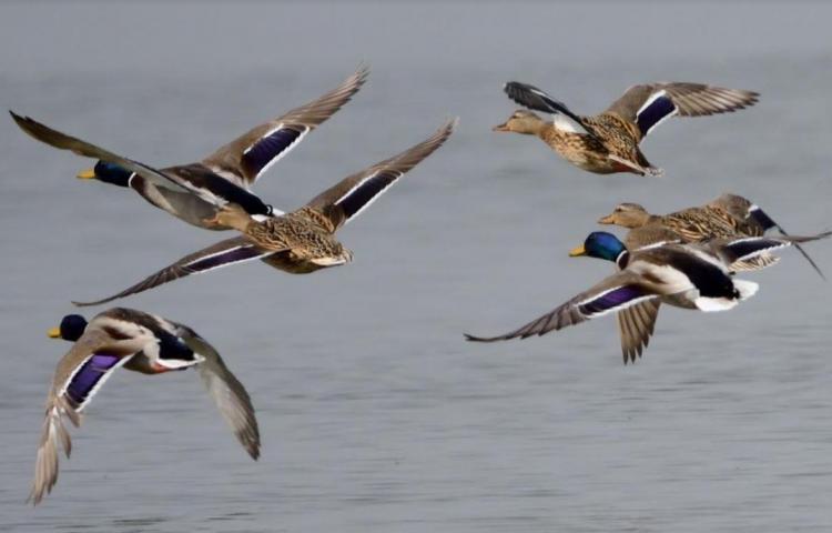 Las rayas de los animales indican al grupo en qué dirección huir