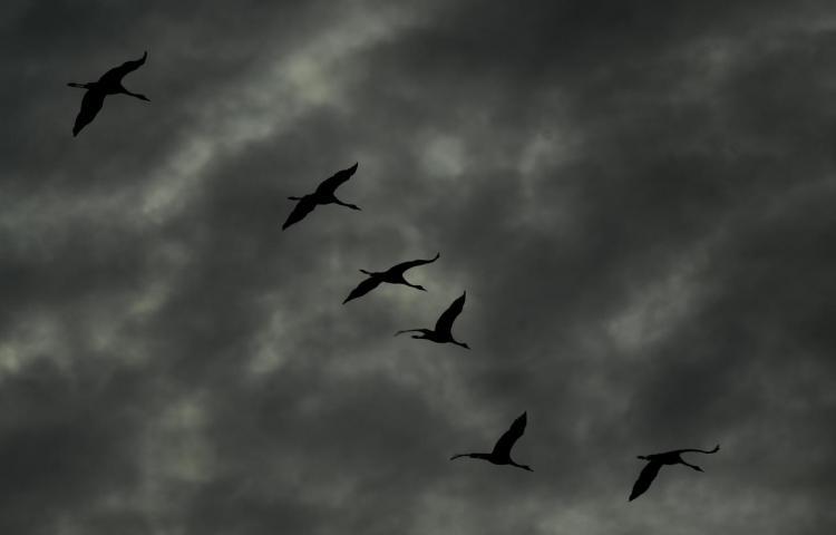 Publican el mayor catálogo genético de aves, un retrato de su gran diversidad