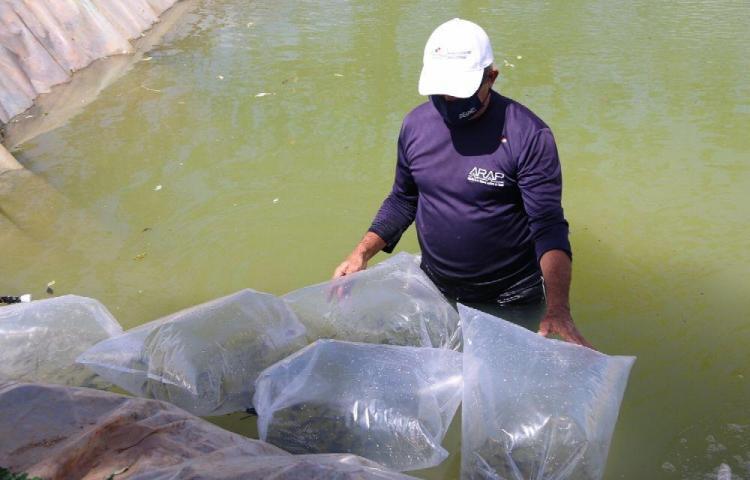 Privadas de libertad en Coclé producirán tilapia en estanque