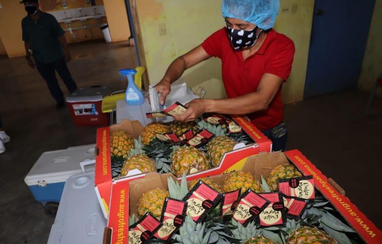 Sector agropecuario creció 5% a pesar de la pandemia