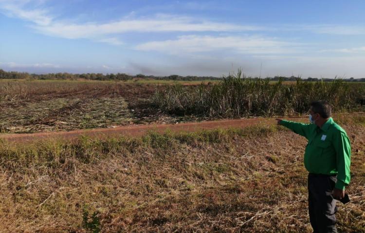 MiAmbiente busca eliminar las quemas de herbazales en Herrera