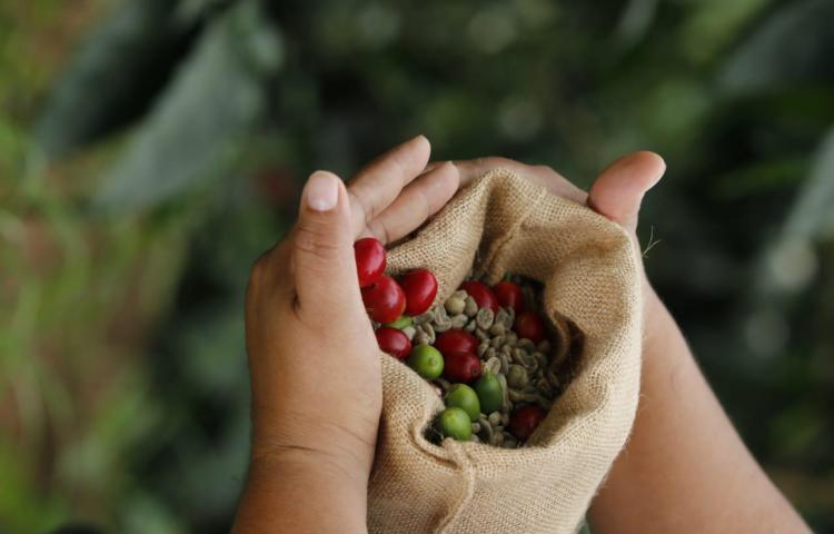 Entregan avances del Circuito del Café como ruta para impulsar el destino Chiriquí