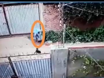Una jauría de perros ataca a una mujer en una ciudad boliviana