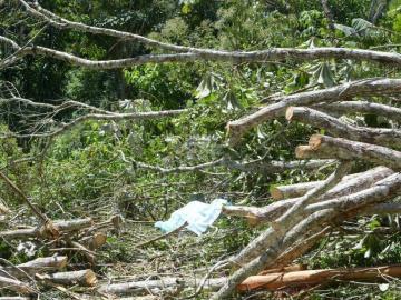 Dos árboles acabaron con la vida de Dino en Guna Yala