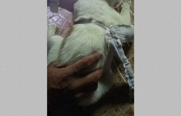 Agarran gato con droga en cárcel Nueva Esperanza