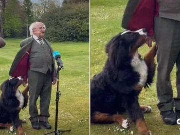 [VIDEO] El presidente de Irlanda y el tierno gesto por el que se hizo viral