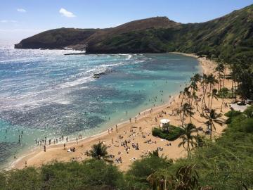 ¡Susto! Tiburón se acercó a una niña de seis años en una playa de Hawái. Aquí el video