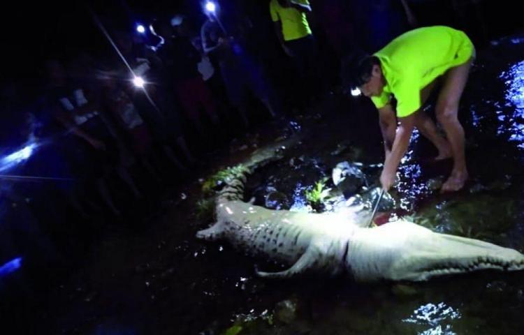 Una menor de 13 años fue devorada por un cocodrilo