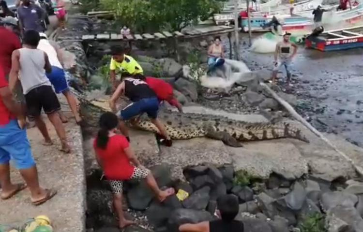 Canallada contra cocodrilo en Aguadulce ya la investiga MiAmbiente