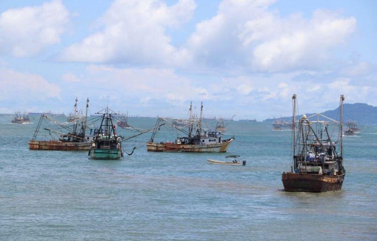 102 barcos se hacen a la mar luego de terminar la veda del camarón este lunes