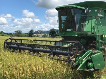 Gabinete aprobó 25 millones de balboas para saldar deudas de maíz, leche y arroz